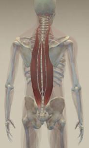 Paraspinals-3D