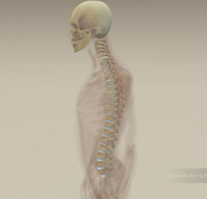 online osteopath, lower back pain relief, facet joints, spine diagram,pain relief for lower back,how the spine works, low back repair,
